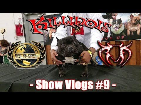 KILLINOIS KENNELS SHOW VLOG#9 BRC GLOBAL SEATTLE,WA AMERICAN BULLY/EXOTIC BULLY DOG SHOW