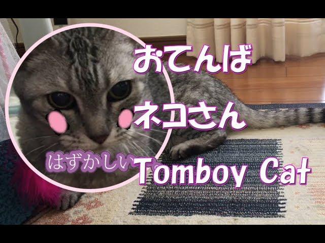 ネコ動画Cat lover video おてんばネコさんTomboy Cat.🐈kk object