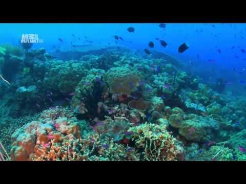 Чудеса голубой планеты [2_7] Австралия и Океания - Видео онлайн