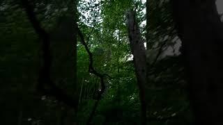 완산칠봉 삼나무숲 2020.5.23. 18:58