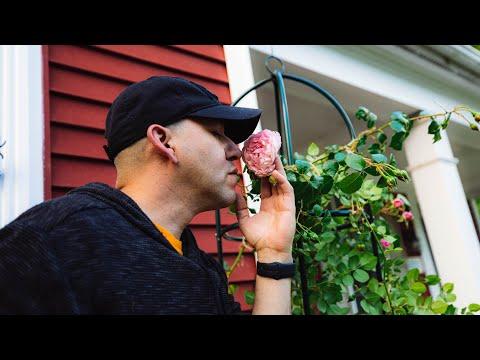 Rose Training Obelisk // Strawberry Hill David Austin Roses // Garden Obsessions