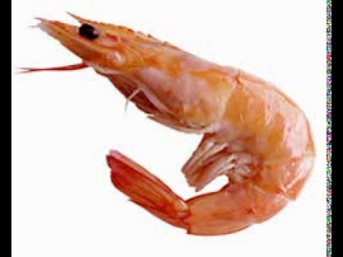 Where are my shrimps?