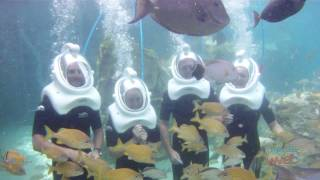 SeaVenture underwater helmet tour at SeaWorld Orlando's Discovery Cove