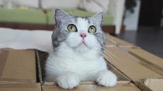 铲屎官自制陷阱诱捕馋猫-没想到被轻松识破-难道这猫成精了