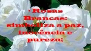 O Significado das rosas