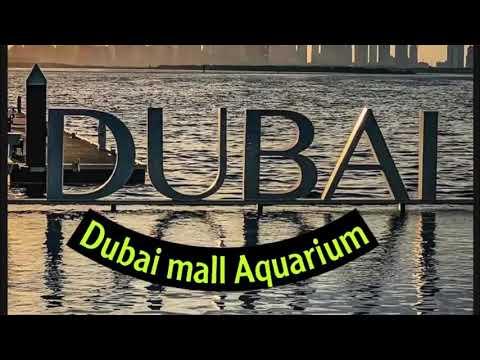 Fazza/ #dubai aquarium/#dubai mall/Fazza Vlog