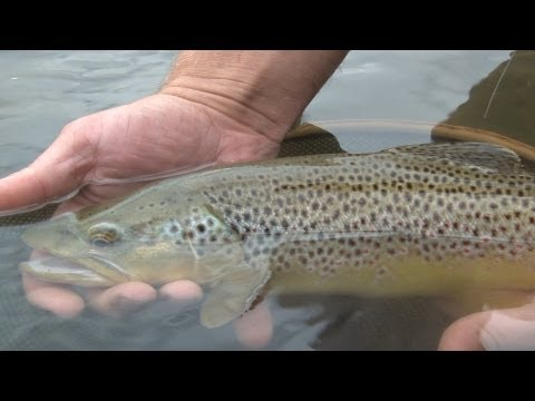 Fly Fishing Montana: Ruby River In Summer - Trailer For Full Show On Amazon Video Season 4