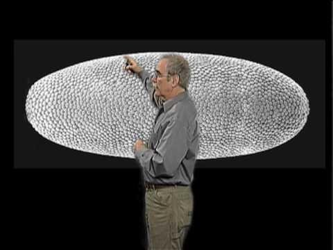 Eric Wieschaus (Princeton/HHMI): Drosophila Embryo Development
