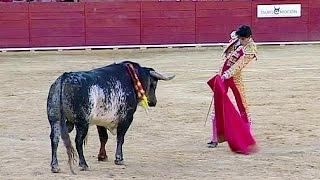 Stier tötet spanischen Torero