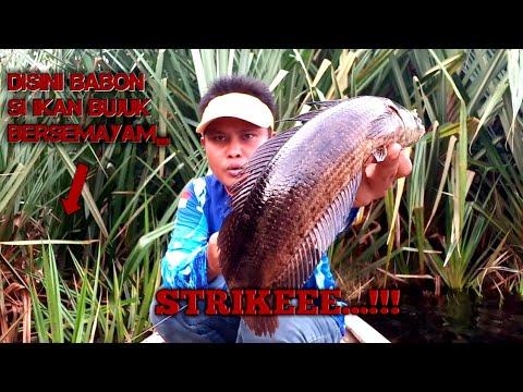 Mantappp!!! Mancing Ikan Bujuk Di Spot Ini Bikin Gak Mau Pulang,,, Vlog Bujuk#11