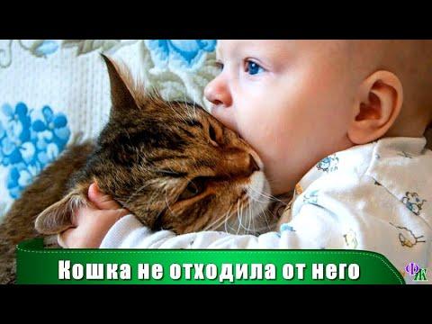 Вопрос: Как реагируют кошки, когда мы уходим из дома?