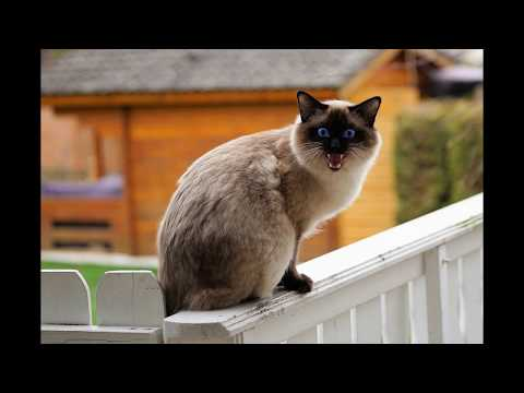 Top 10 Most Adorable Cats Breed