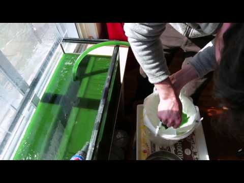 Home Spirulina Harvest