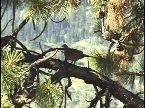Birds In Central Idaho