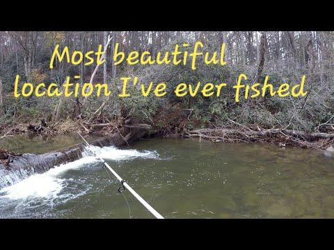 FIRST LIMIT Of TROUT All Season + STRANGE Fish Behavior!