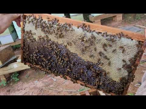 #149 Простой способ, Откачка мёда- пчеловодство для начинающих