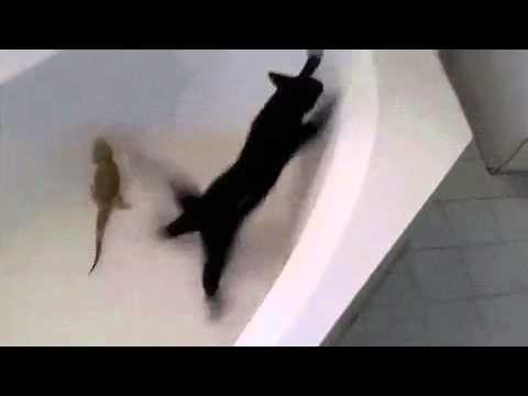 شاهد القط بقا فأر#مقطع مضحك جامد فشخ