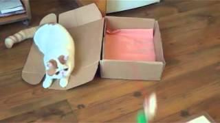 Кот Снупи и Коробка/ Cat Snoopy and Box
