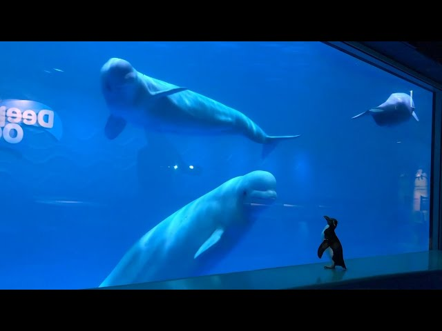 In Isolation ... At Aquariums - Great Lakes Now - 1014 - Segment 3