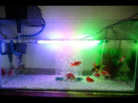 Aquarium Ikan Mas Koki Goldfish Aquarium Youtube