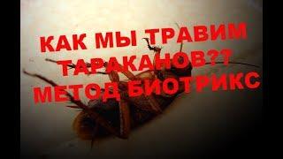 видео Средство get от тараканов – свойства и особенности применения