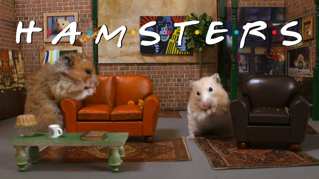 """Central Fluff 'Friends' Remade With Hamsters"""