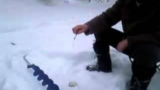 Зимняя ловля Хариуса в Мезенском(Ездили на рыбалку, поймали рыбу, отчет о рыбалке на sadok.ru Хариус мелковат, ловился на мормышки светлых тонов..., 2011-03-14T21:30:51.000Z)