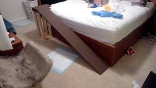 Dog Runs Up The Ramp