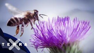 10 Fakten über Bienen   Superzeitlupe
