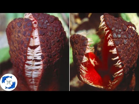 15 Weird and Bizarre Plants