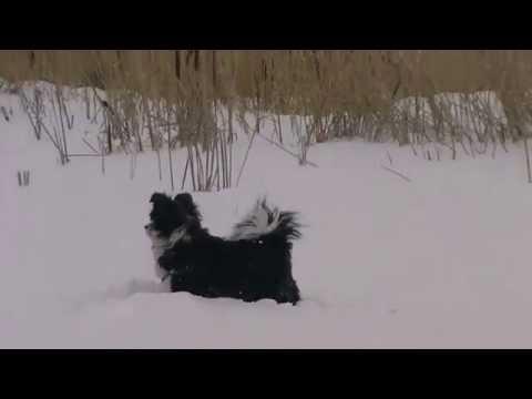 Видео на песню Насти** Снежные Волки **