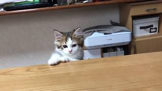 ひょこっと顔を出す子猫がかわいい thumbnail