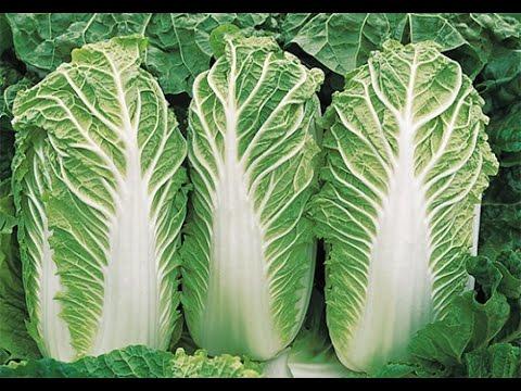 Брокколи: польза и вред, правила приготовления капусты