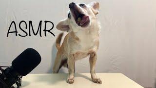 My Dog Tries ASMR