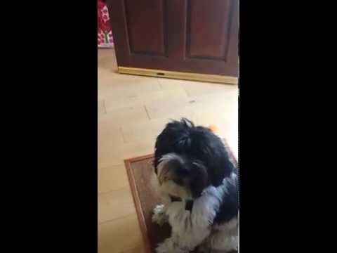 Bono the singing dog
