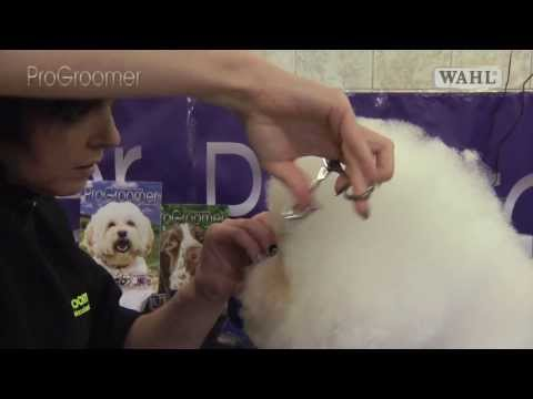 Grooming Guide - Bichon Fris Show or Competition Trim - Pro Groomer