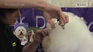 Grooming Guide  Bichon Frisé Show or Competition Trim  Pro Groomer