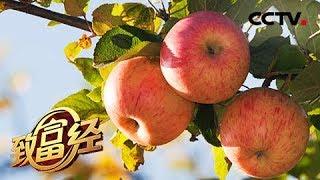 《致富经》 20190501 丑苹果价高 全靠一刀| CCTV农业
