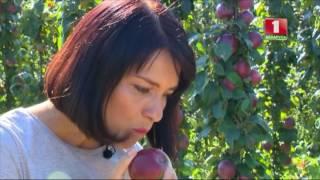 видео Лесная и садовая фиалки, описание, как посадить на даче.