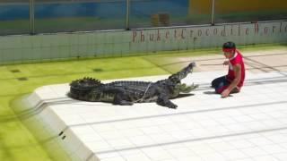 Игра с крокодилом в Таиланде