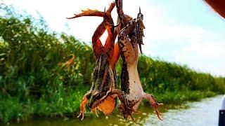СОМ ДУРЕТ ОТ ЭТОЙ НАЖИВКИ ТАКАЯ рыбалка БЫВАЕТ ТОЛЬКО В Астрахани
