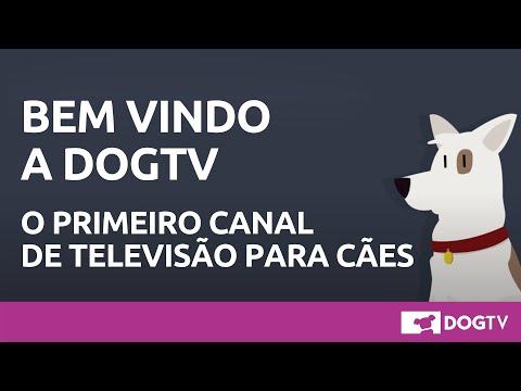 Bem vindo a Dog TV, terapia audiovisual para cachorros!