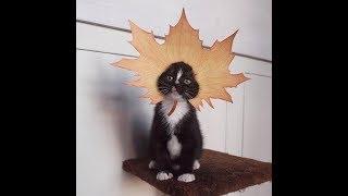 Супер кот/Смешное видео про котов 2017/FUNNY CATS 2017