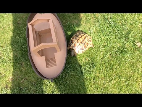 World's Angriest Tortoise Chases Owner