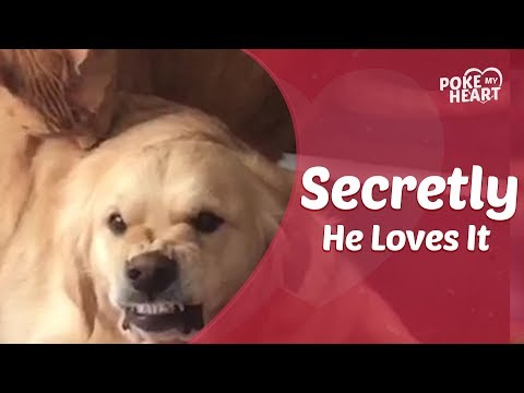 Must See Popular Videos | Plugged In - Dog Absolutely Hates Getting Licked by Cat