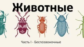 10.1 Животные - беспозвоночные (5 класс) - введение в Биологию