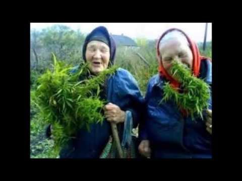 Capitulo 7 ¿La marihuna adelgaza? Republica weed.