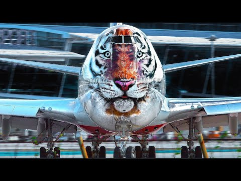 Planespotting Phuket 2   THE BEACH (Multi-Cam): Tiger & Dragon 747/A330; Lion & Firefly A330/ATR;...