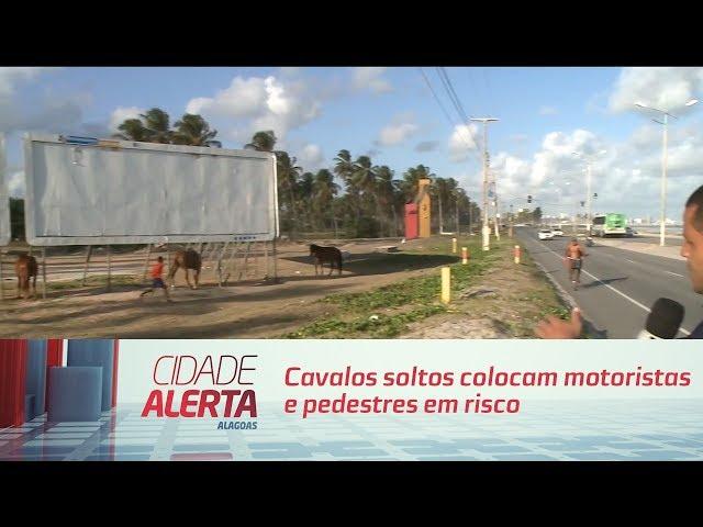 Cavalos soltos colocam motoristas e pedestres em risco