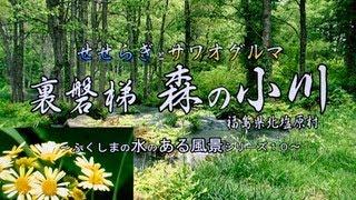 福島の風物詩より ~裏磐梯 森の小川 せせらぎとサワオグルマ~